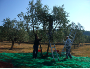 mount olive personals Cl kentucky choose the site nearest you: bowling green cincinnati, oh eastern kentucky.